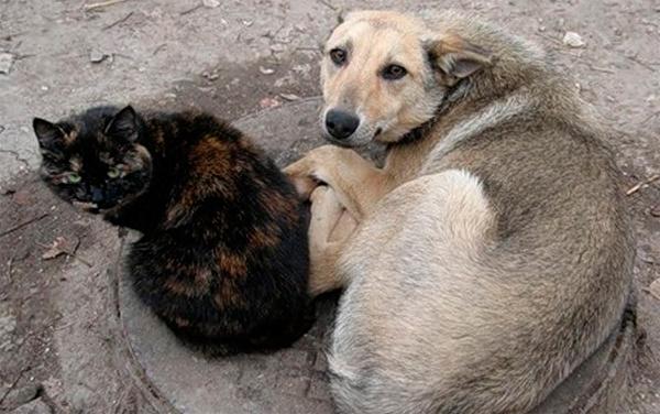бездомные-животные.jpg